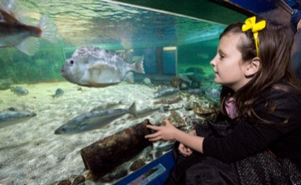 Mcduff marine aquarium UK